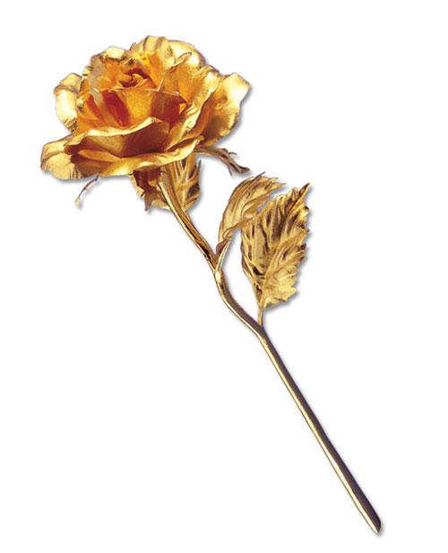 凋落的玫瑰花结构素描图